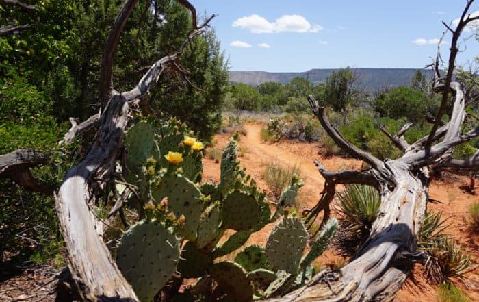 Courthouse Butte Loop - Sedona Arizona