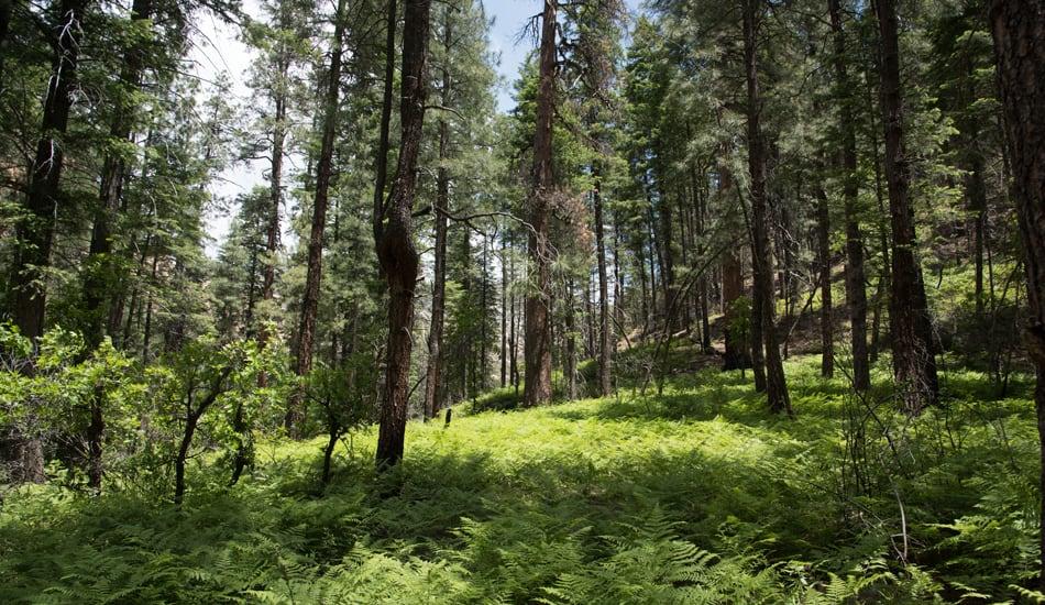 Hiking Arizona - Westfork Trail Sedona